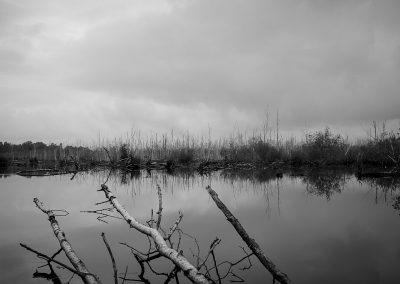 Totes Moor, Naturpark Steinhuder Meer