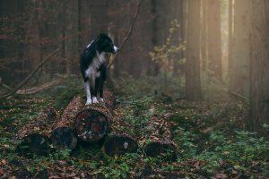 Hundefotografie André Bauer