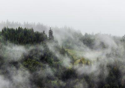 Schwarzwald2015_IMG_6953-2